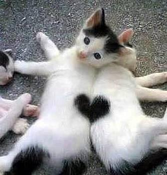 Lovely kitties by Sunkies Fang