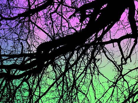Amy Sorrell - Lunar Silhouette
