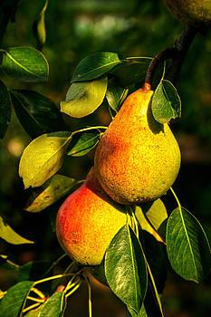 Matt Create - Luscious Pears