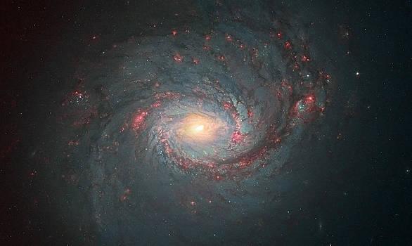 M77 Hubble Space Telescope by Andre Van der Hoeven