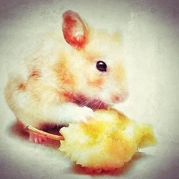 Ma Bebé #cute #hamstagram #hamster by Maura Aranda