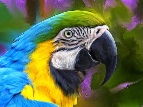 Dominic Piperata - Macaw