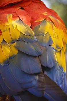 Adam Romanowicz - Macaw Parrot Plumes