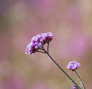 Macro Purple Flower Square by Pixie Copley