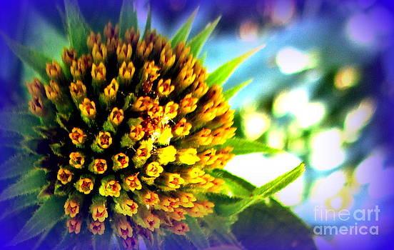 Magic Flower by Maria Scarfone