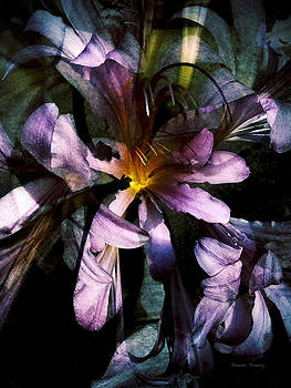 Magic Lily by Shawn Young
