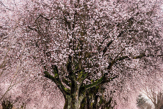 Magical Blossoms by Shari Whittaker