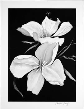 Magnolia by Barbara Barry-Nishanian