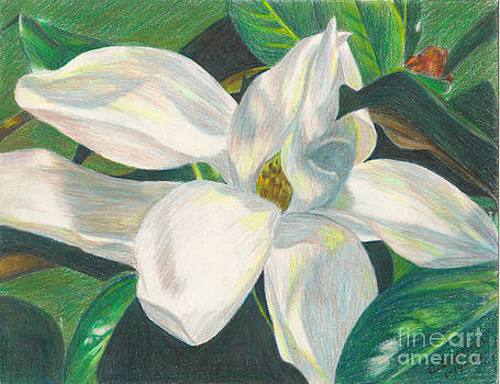 Magnolia Blossom by C L Swanner
