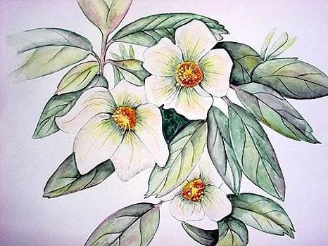 Magnolias by Cristy Crites