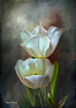 Majestic tulips by Bonnie Willis