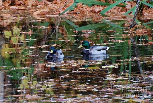 Mallards 2 by Marsha Thornton
