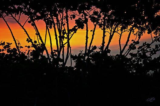 Mangrove Sunset by Christine Stonebridge