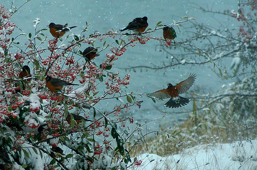 Many Hungry Robins by Wendy Emel