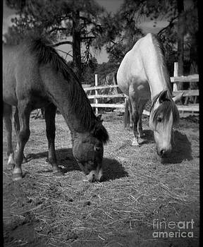 Mare and Colt by Virginia Furness