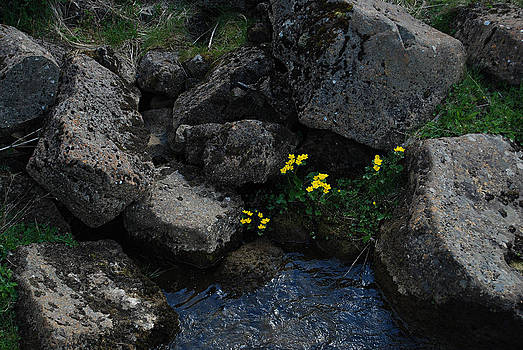 Marsh Marigolds I by Marilynne Bull
