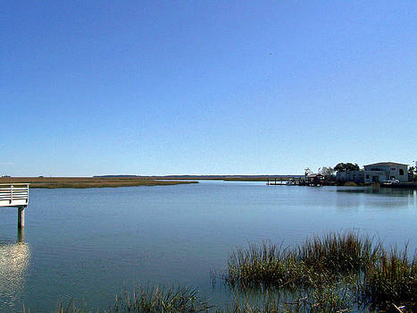 Patricia Taylor - Marshes of Glynn County