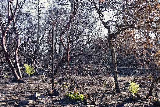 Martin Road Wildfire Santa Cruz Mountains California Larry Darnell by Larry Darnell