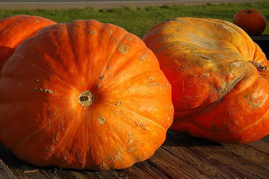 LeeAnn McLaneGoetz McLaneGoetzStudioLLCcom - Mass Pumpkins