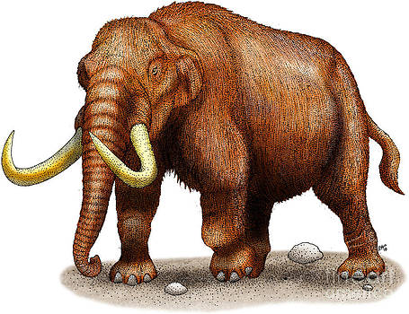 Roger Hall and Photo Researchers - Mastodon