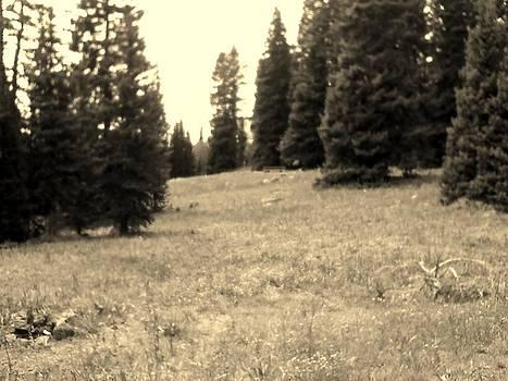 Meadow by Anne Back