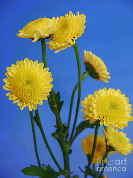 Mellow Yellow by Nancie DeMellia