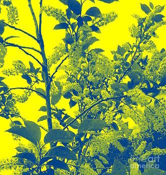 Sue Wild Rose - Mellow Yellow