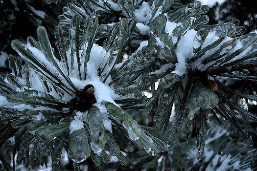 Memories in Ice by Yvonne Scott