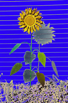James Steele - Metal Sunflower
