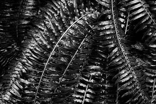 Charmian Vistaunet - Metallic Ferns