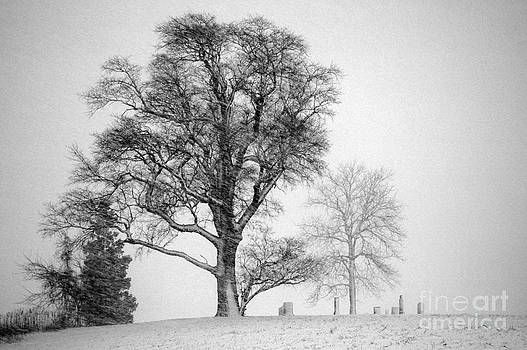 Mid Winter- Guardian Tree by Mark Clifford