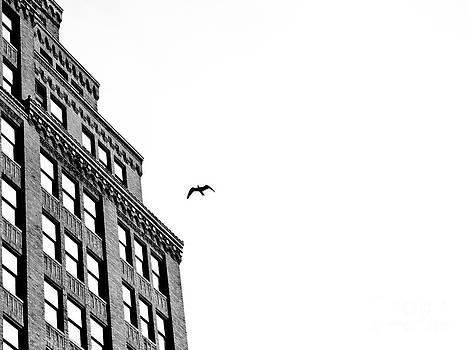 Midday Flight by Darwin Lopez