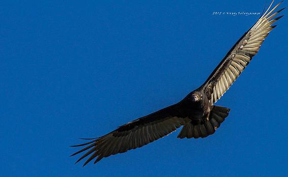 Mighty Eagle by Virag Yelegaonkar