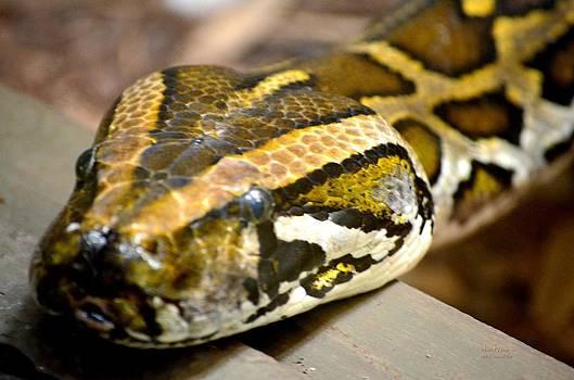 Maria Urso  - Mighty Python