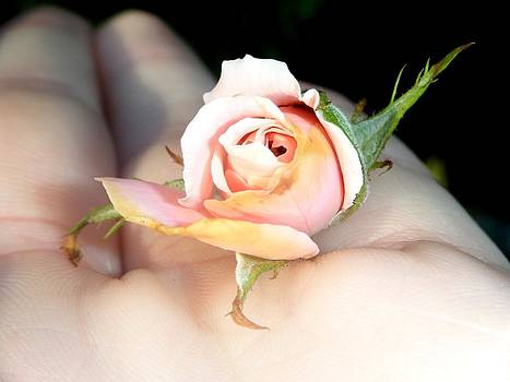 Miniature Rose by Cammie Keller