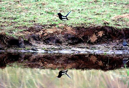 Mirror by Manaswinee Mohanty