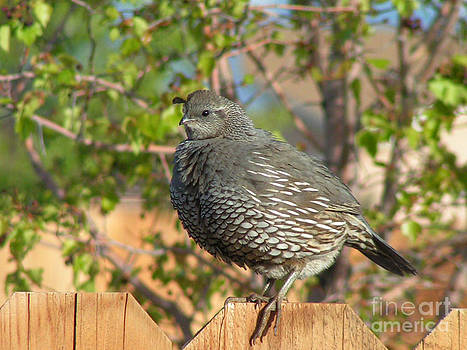 Miss Quail by Maureen Ida Farley