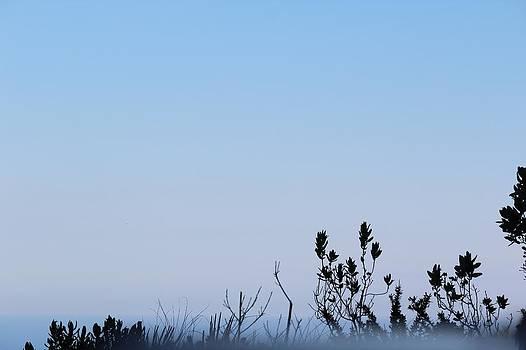 Misty blue by Shiladitya Sinha