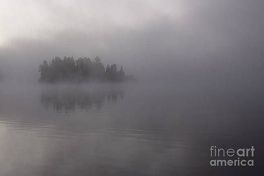 Misty Evergreen Island by Chris Hill
