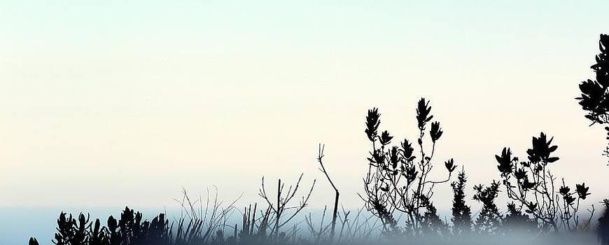 Misty Grey by Shiladitya Sinha