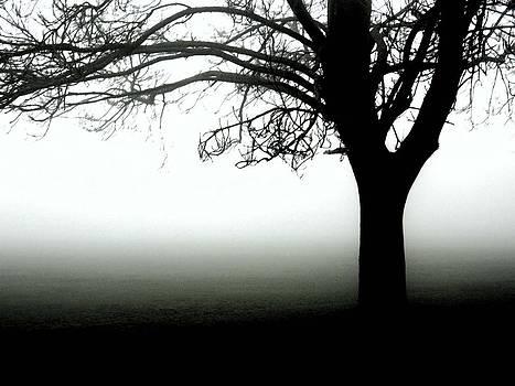 Misty Morning  by Jason Michael Roust
