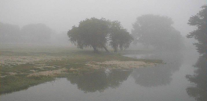 Frank SantAgata - Misty Morning