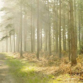 Misty Sunrise by Paul Grand
