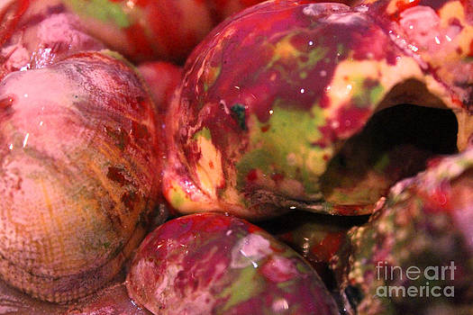 Mixed Shells by Betul Salman