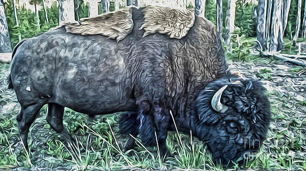 Gregory Dyer - Molting Bison in Yellowstone