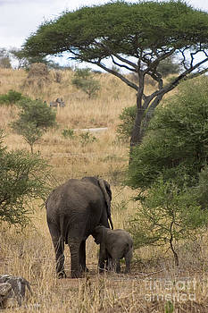 Darcy Michaelchuk - Mom and Baby Elephant