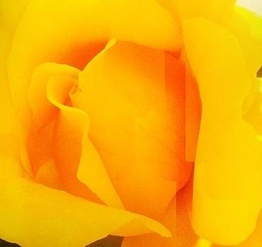 Moms yellow rose by Paul Washington