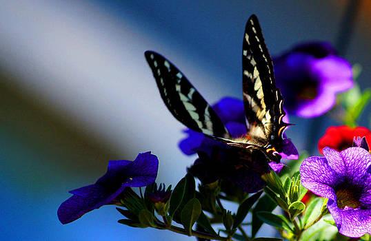 Monarch 2 by Wendy Emel