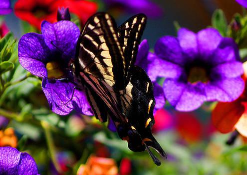 Monarch 3 by Wendy Emel