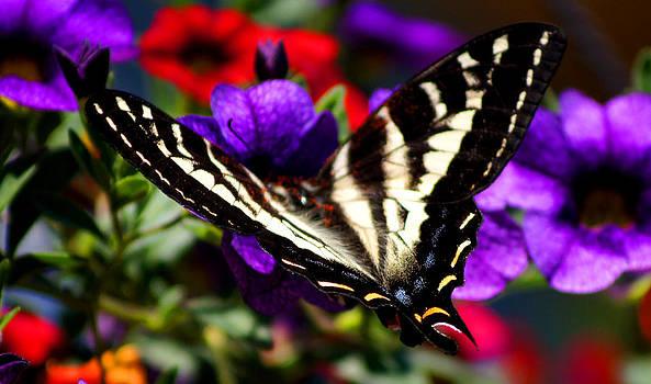 Monarch by Wendy Emel